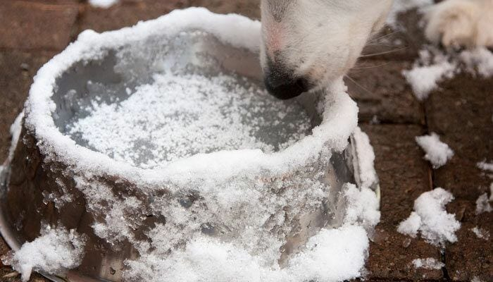 User Tips Step by Step Process to Prevent a Dog's Water Bowl From Freezing Up Outside
