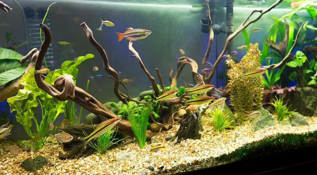 Problems That Come With Softening Aquarium Water