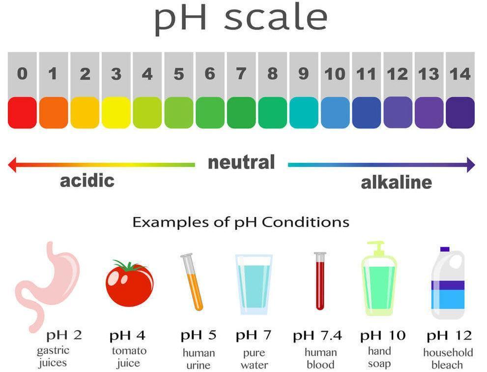 What Is The PH Scale?