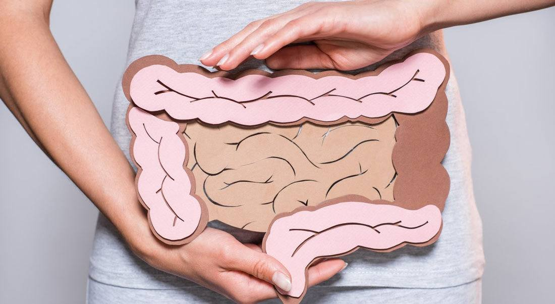 How Digestion Works